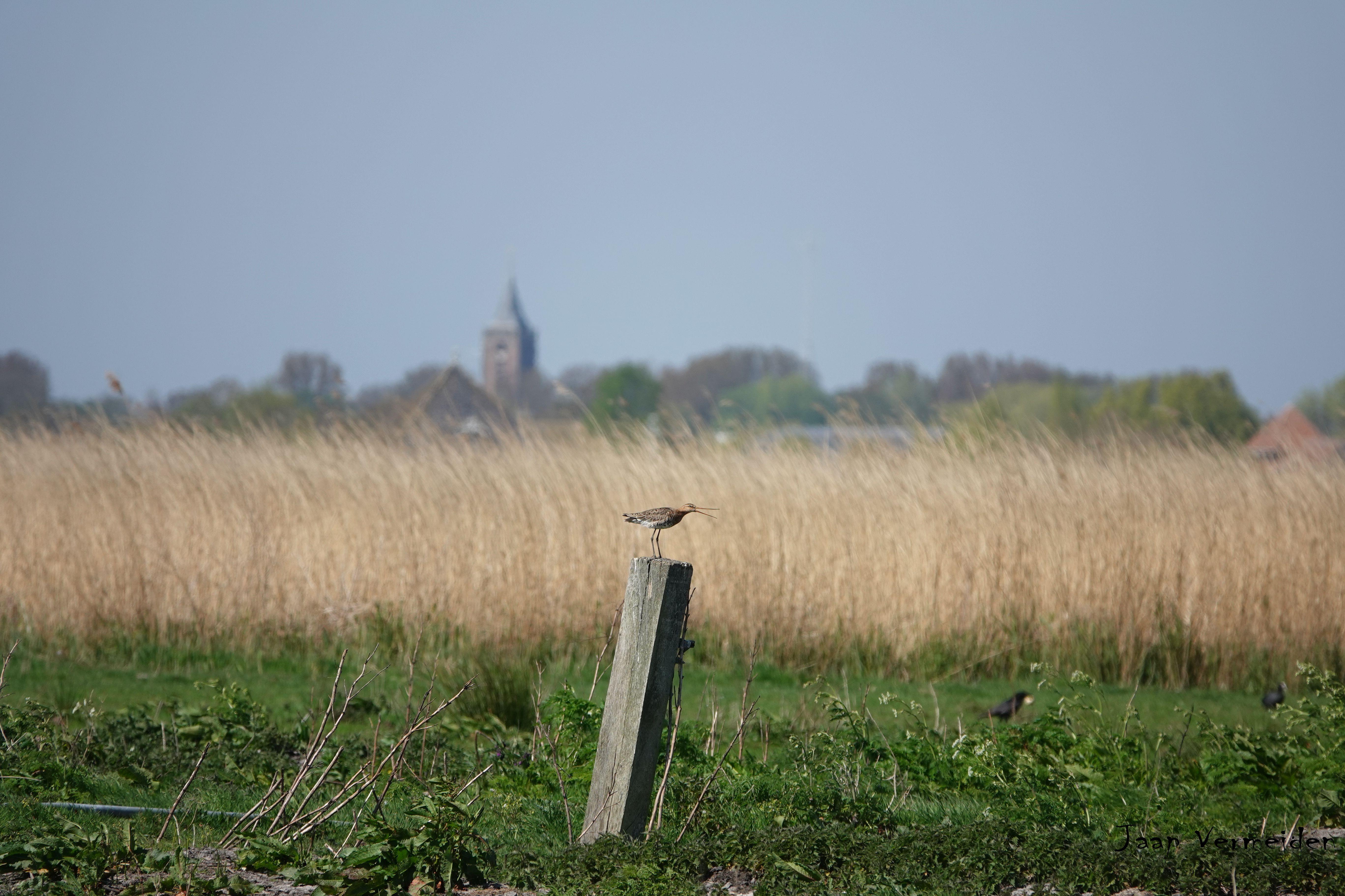 Vogelexcursie Waterland