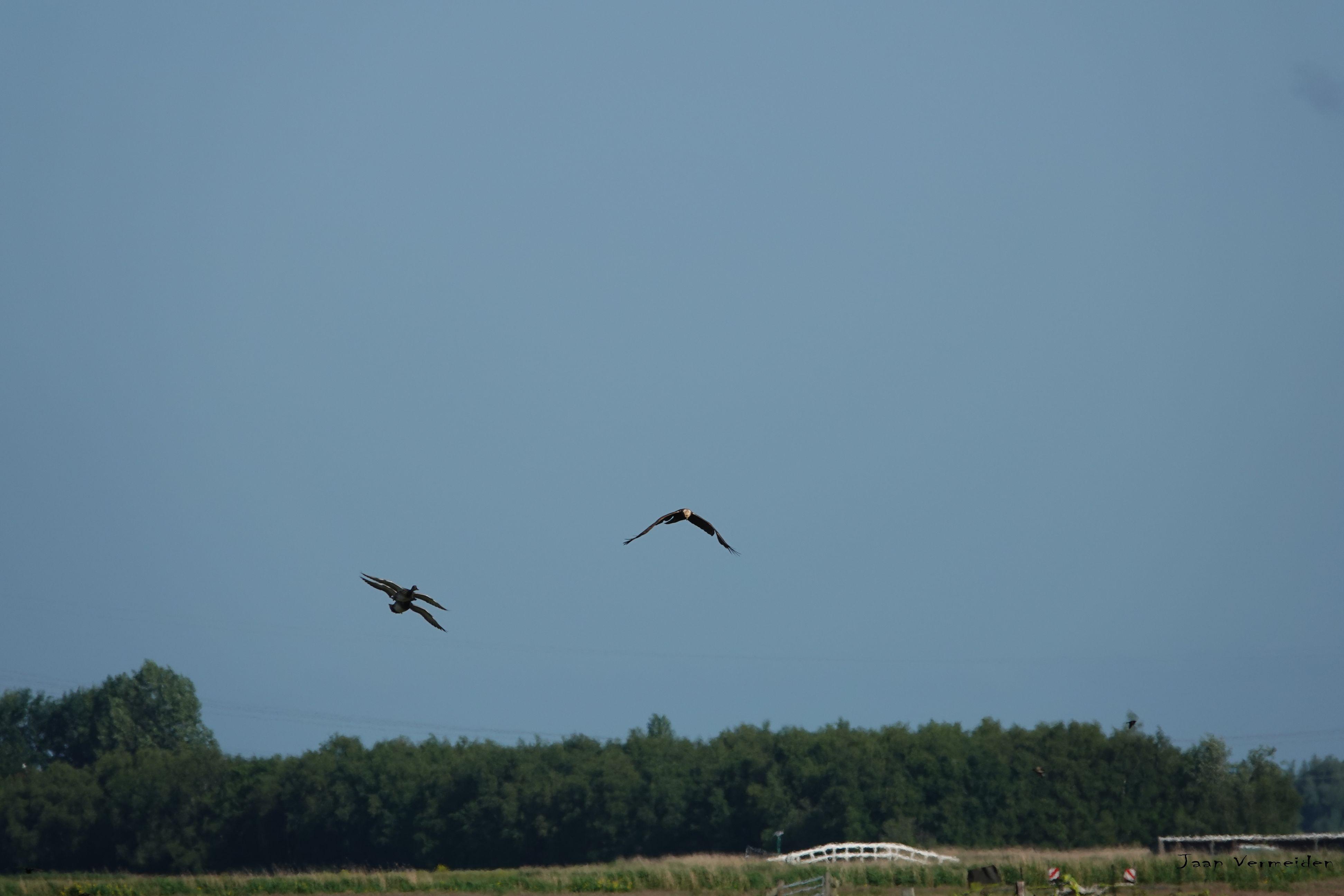 Vogelexcursie waterl