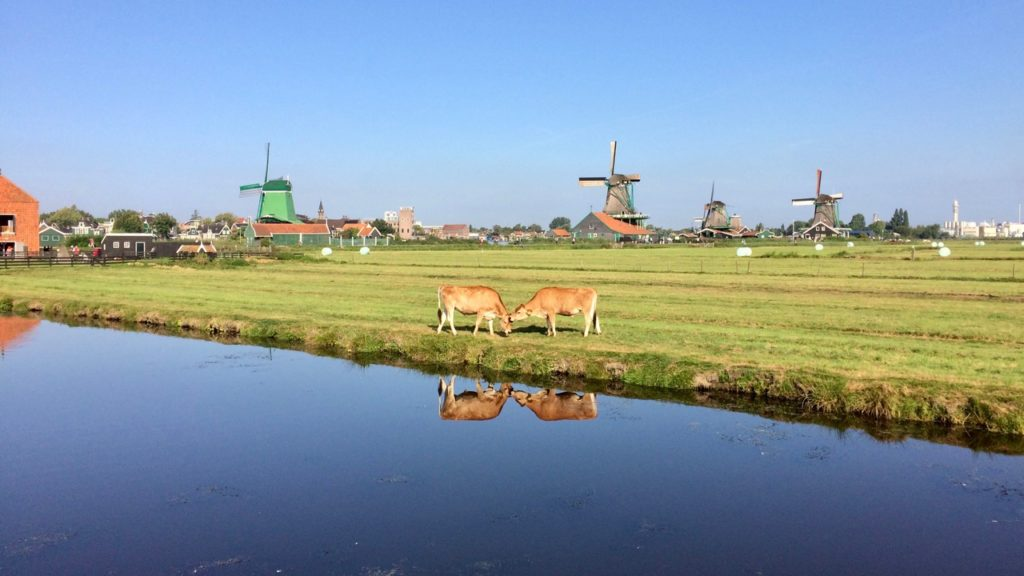 Private experience windmills and countryside