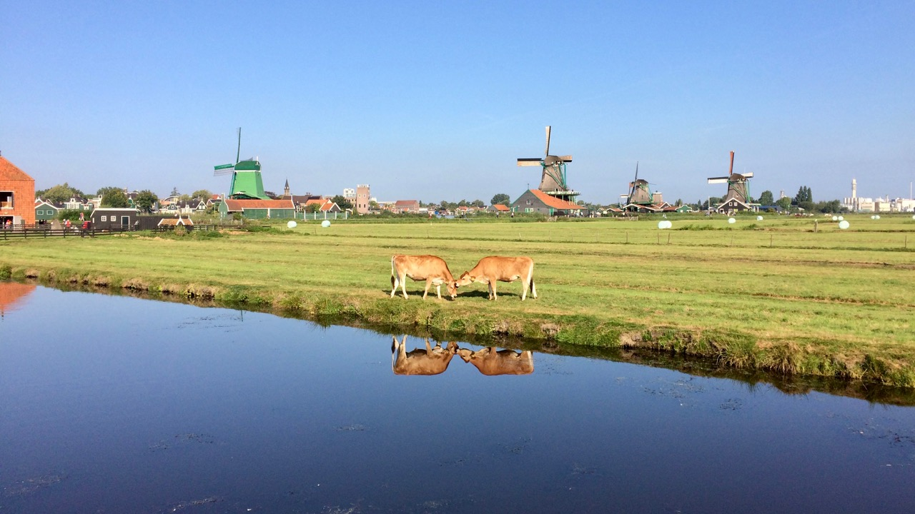 Privétour windmolens & platteland