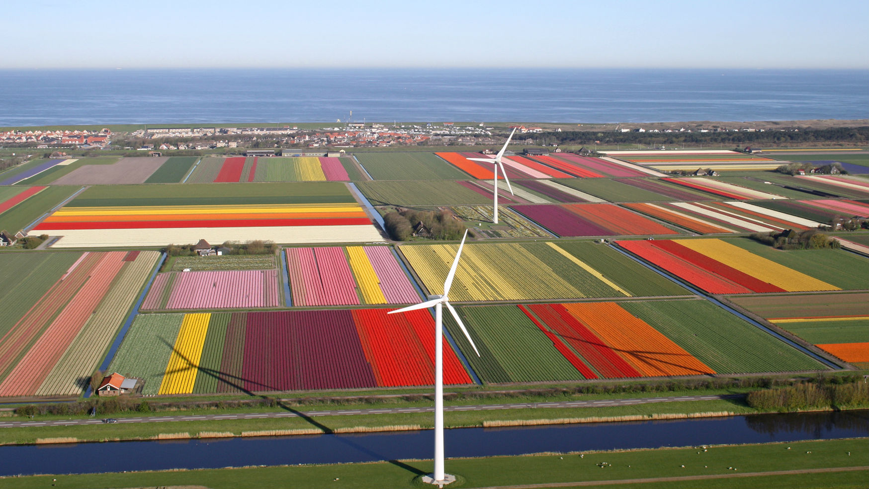 The largest tulipfields in the world